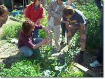 ridley_grove_Community-Garden16