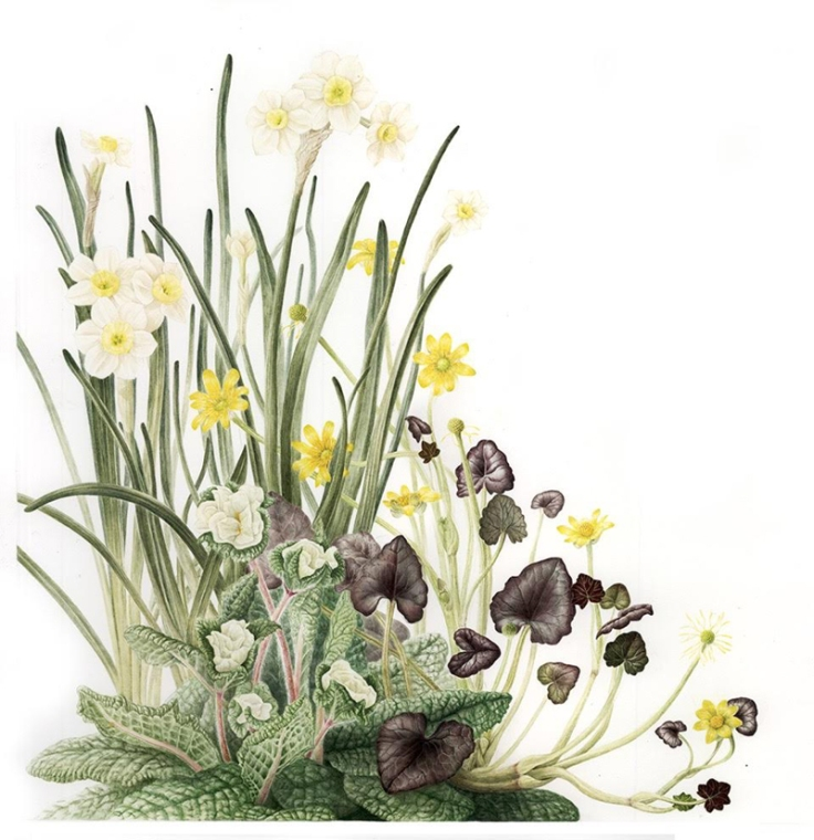 botanicalarts2